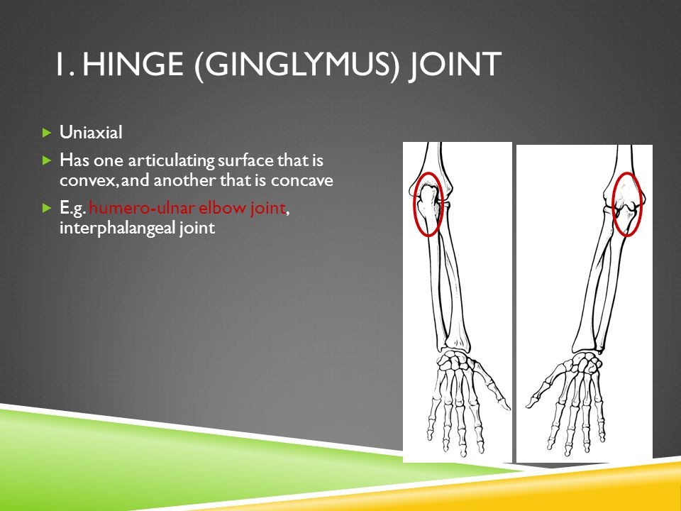 1. Hinge (Ginglymus) Joint