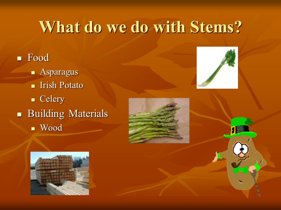 What do we do with Stems Food Building Materials Asparagus