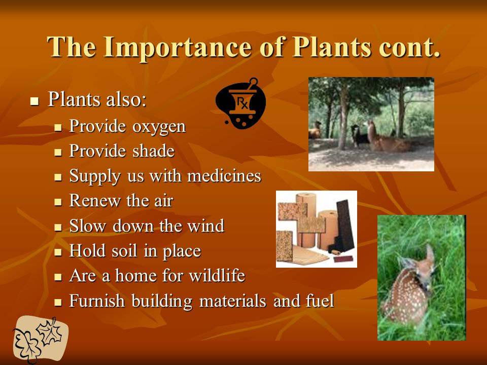 The Importance of Plants cont.