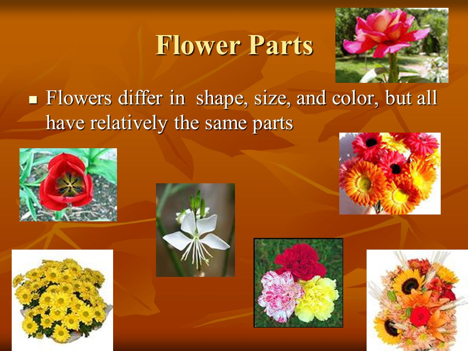 Flower Parts Flowers differ in shape, size, and color, but all have relatively the same parts