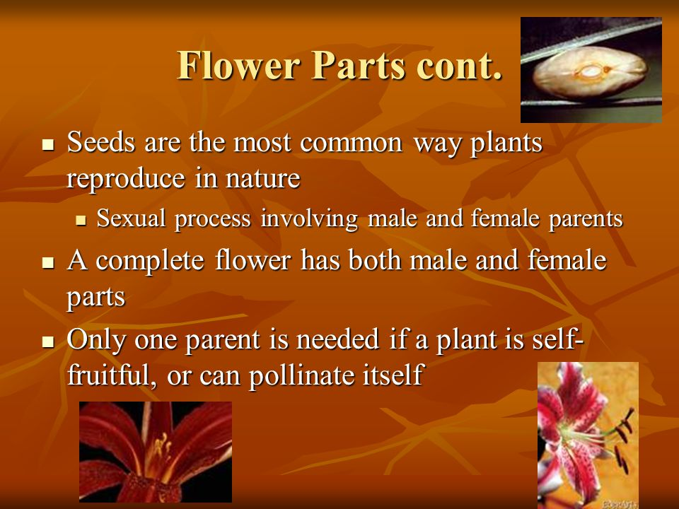 Flower Parts cont. Seeds are the most common way plants reproduce in nature. Sexual process involving male and female parents.
