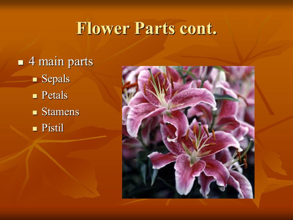 Flower Parts cont. 4 main parts Sepals Petals Stamens Pistil