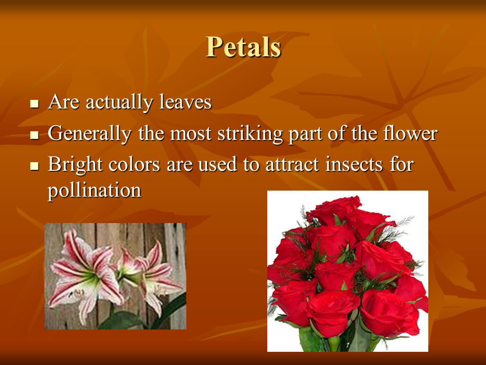 Petals Are actually leaves