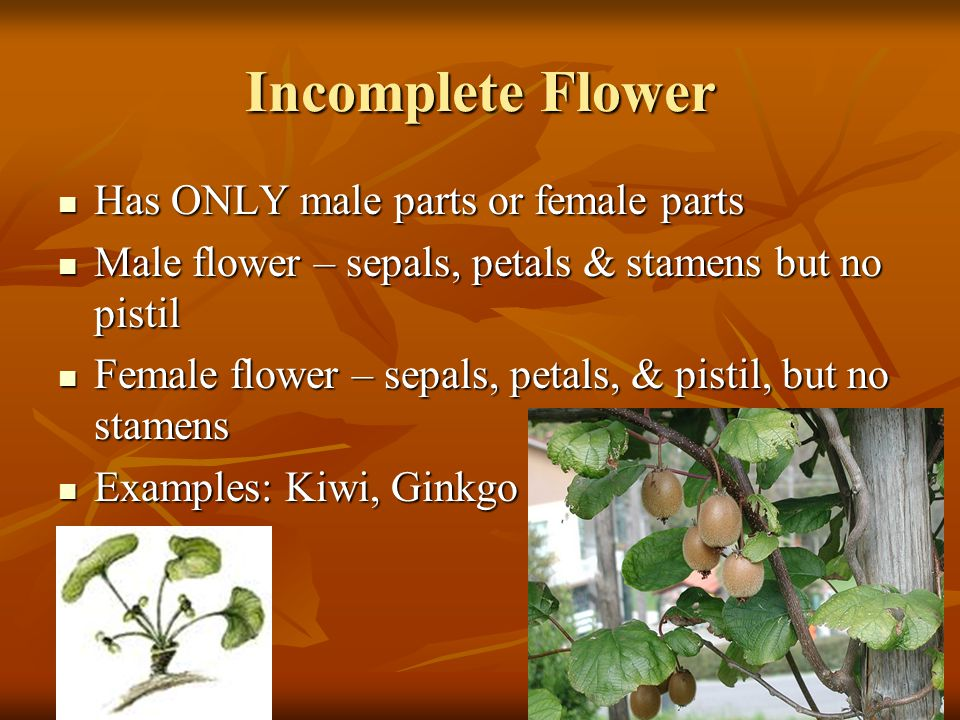 Incomplete Flower Has ONLY male parts or female parts
