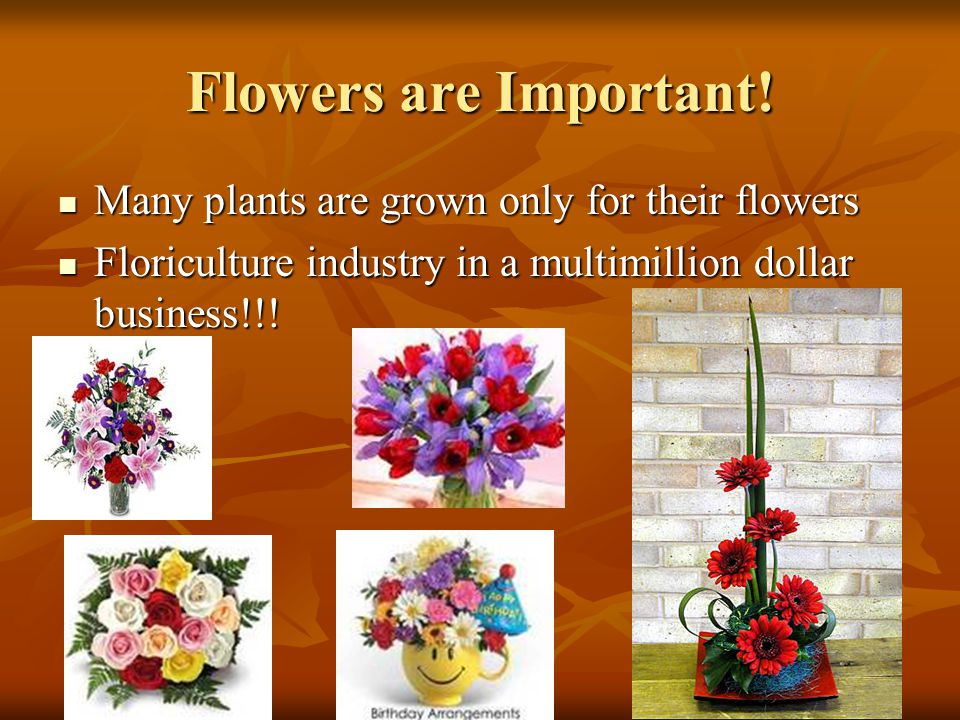Flowers are Important! Many plants are grown only for their flowers
