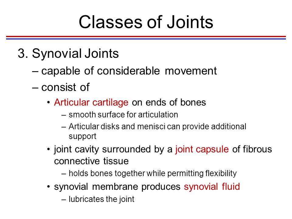Classes of Joints 3. Synovial Joints capable of considerable movement