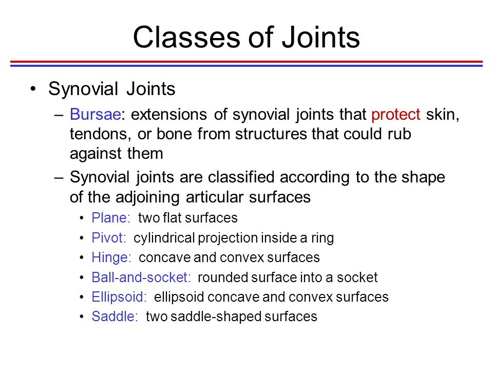 Classes of Joints Synovial Joints