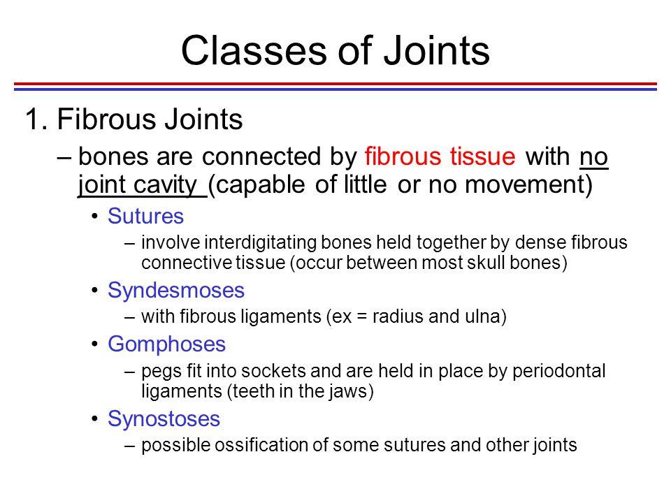 Classes of Joints 1. Fibrous Joints