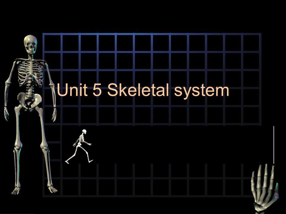 Unit 5 Skeletal system