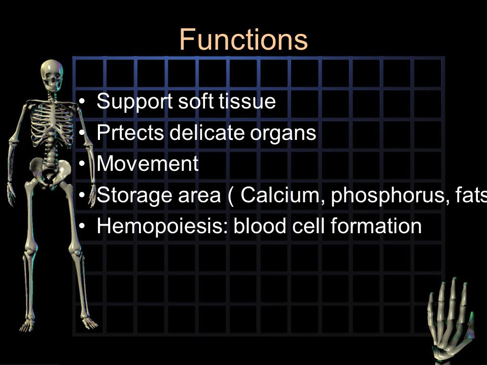 Functions Support soft tissue Prtects delicate organs Movement