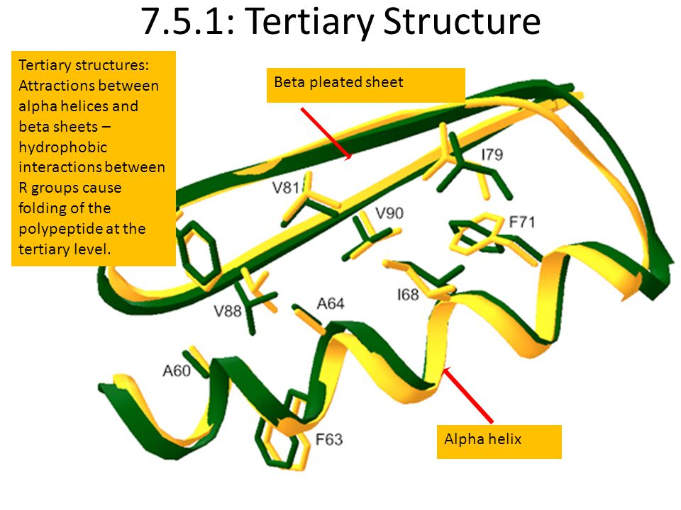 7.5.1: Tertiary Structure