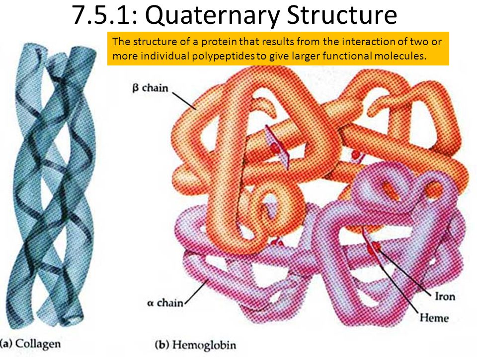 7.5.1: Quaternary Structure