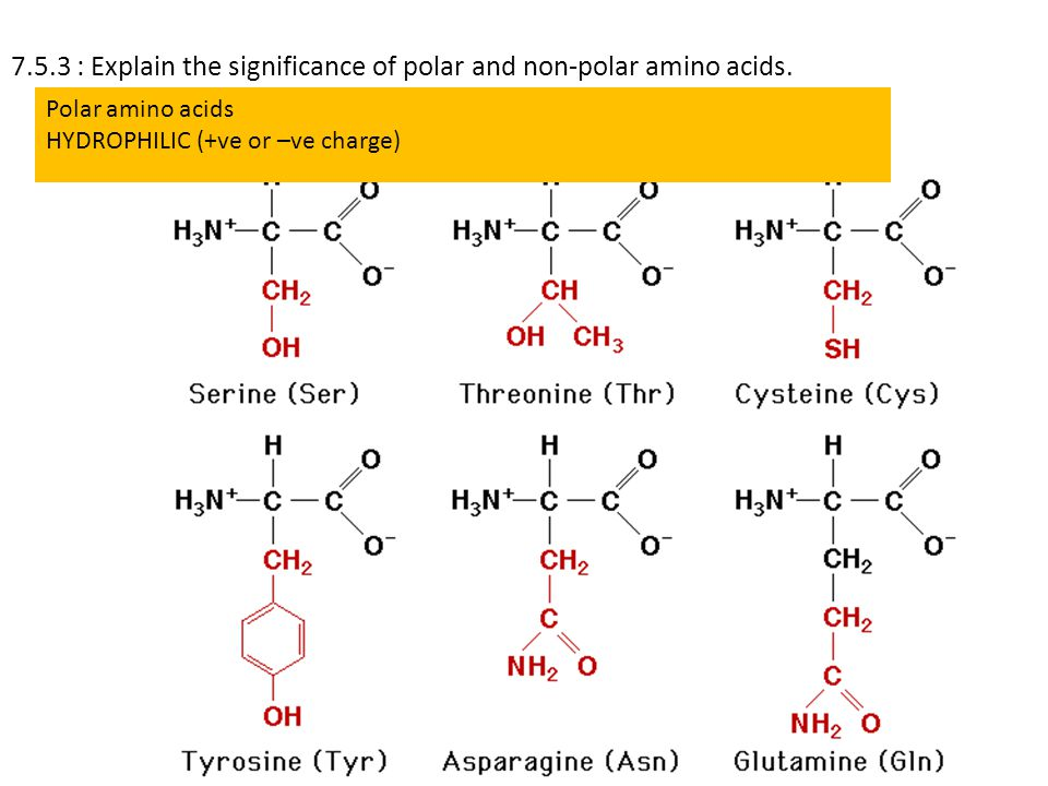 7.5.3 : Explain the significance of polar and non-polar amino acids.