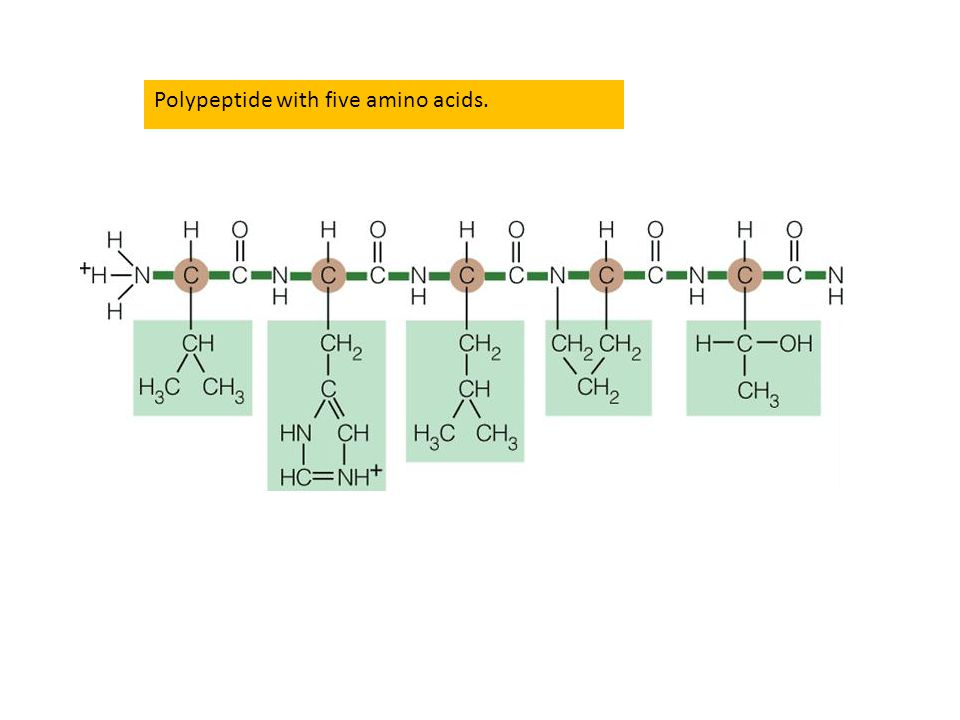 Polypeptide with five amino acids.