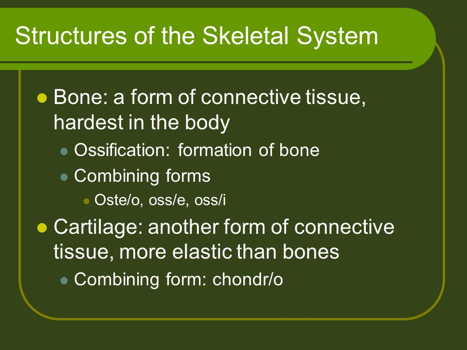 Structures of the Skeletal System