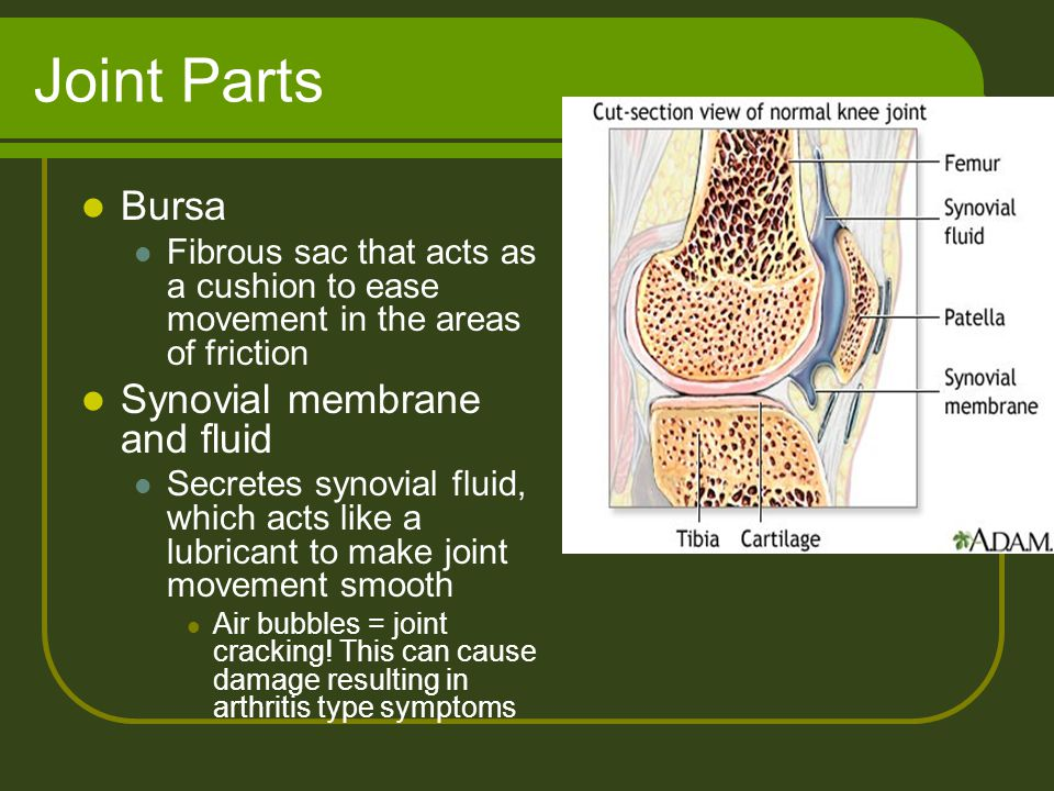 Joint Parts Bursa Synovial membrane and fluid