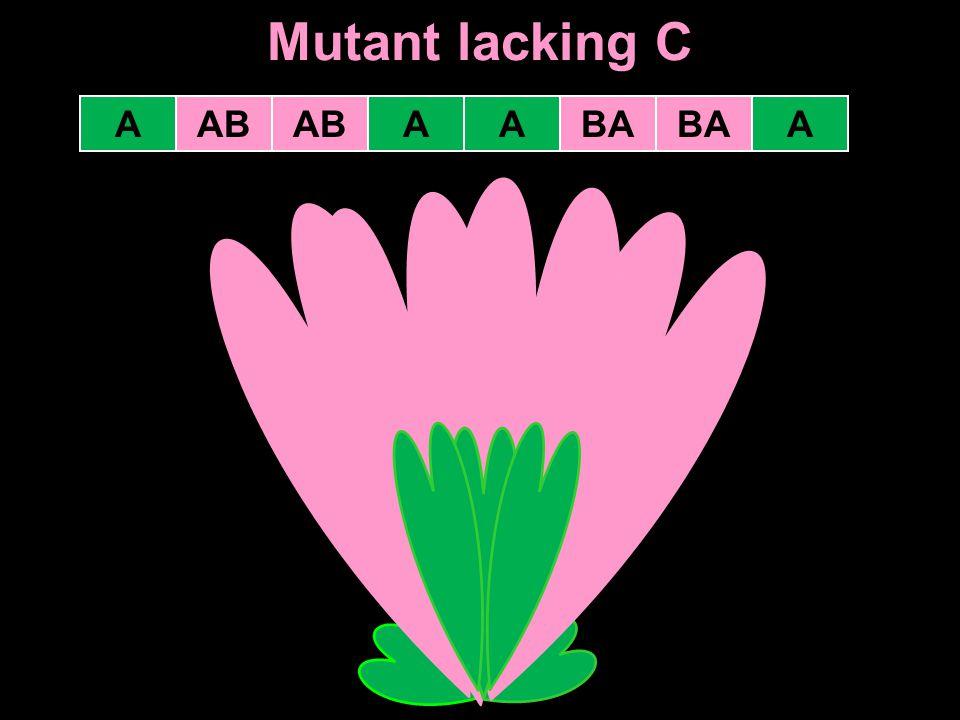 Mutant lacking C A AB AB A A BA BA A