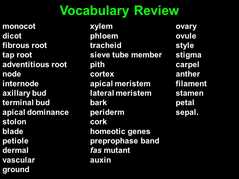Vocabulary Review monocot dicot fibrous root tap root