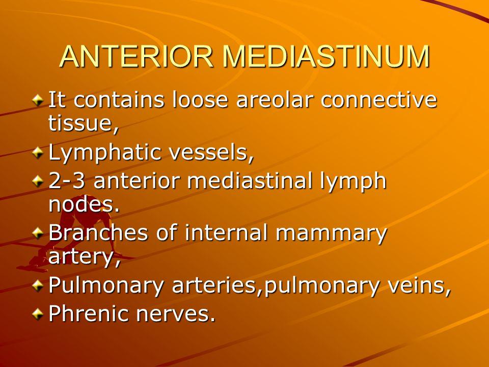 ANTERIOR MEDIASTINUM It contains loose areolar connective tissue,