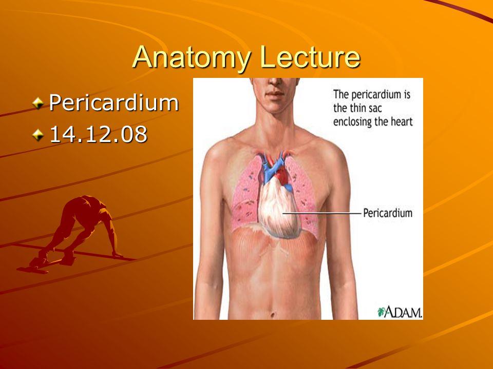 Anatomy Lecture Pericardium 14.12.08