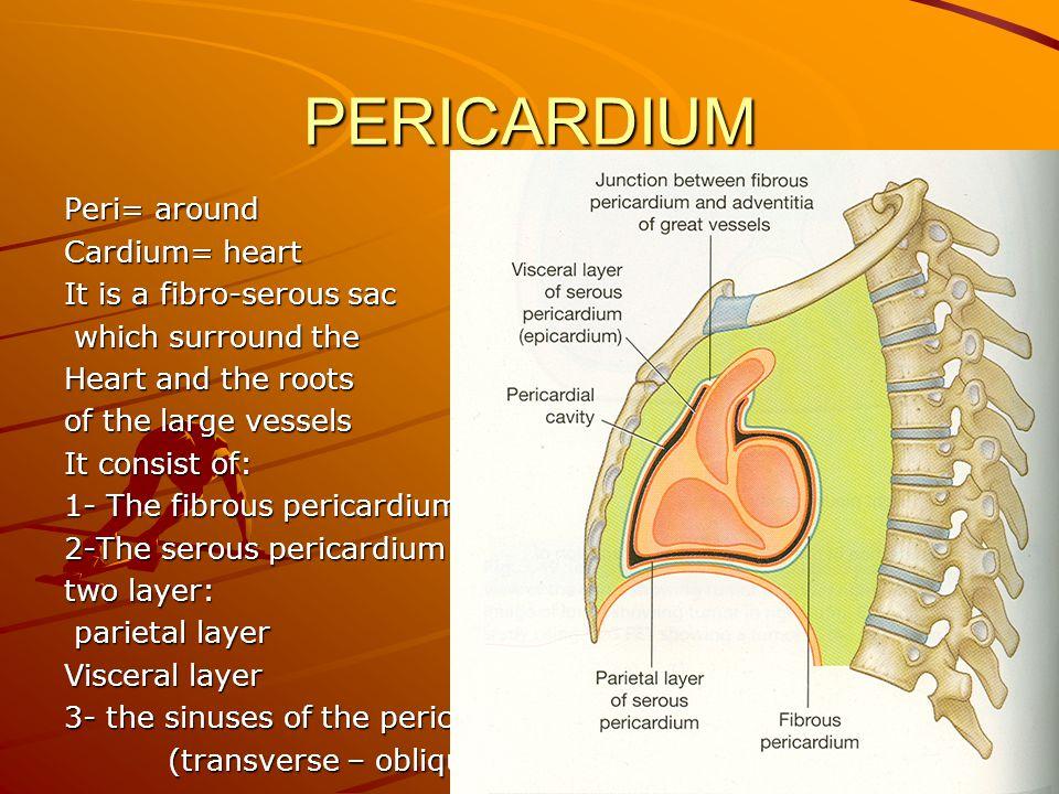 PERICARDIUM Peri= around Cardium= heart It is a fibro-serous sac