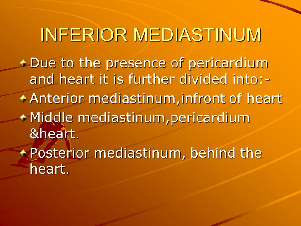 INFERIOR MEDIASTINUM Due to the presence of pericardium and heart it is further divided into:- Anterior mediastinum,infront of heart.