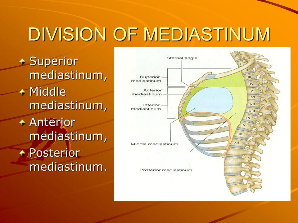 DIVISION OF MEDIASTINUM