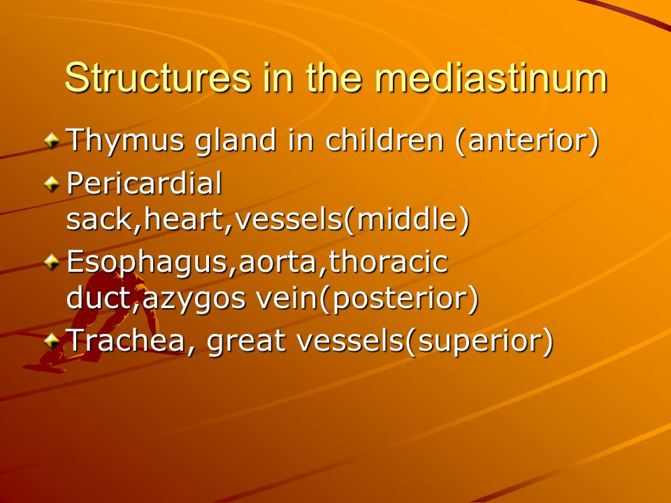 Structures in the mediastinum