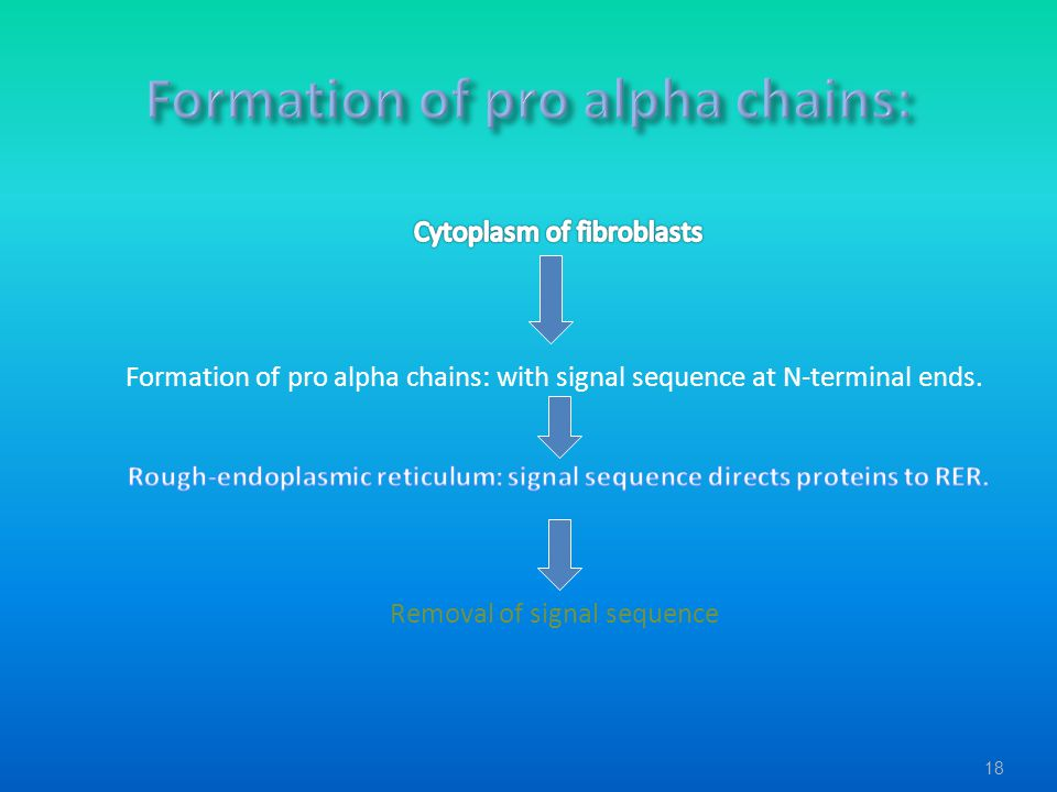 Formation of pro alpha chains: