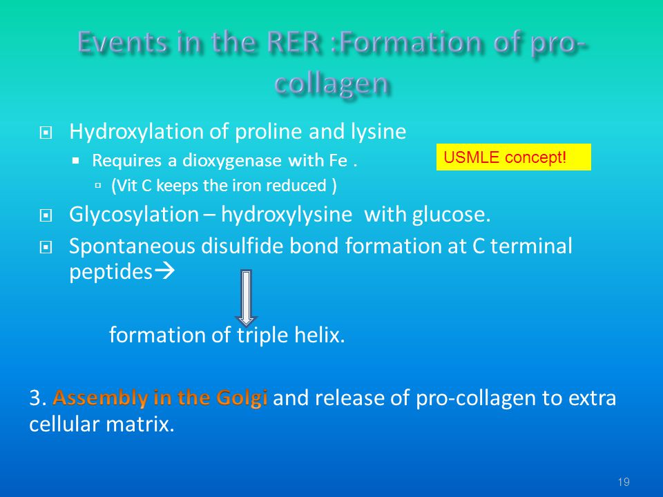 Events in the RER :Formation of pro-collagen