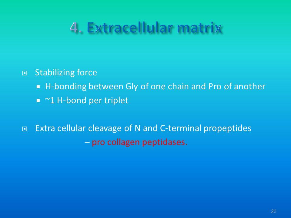 4. Extracellular matrix Stabilizing force