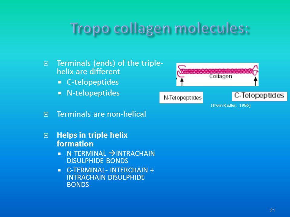 Tropo collagen molecules: