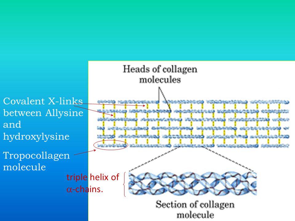 Covalent X-links between Allysine and hydroxylysine