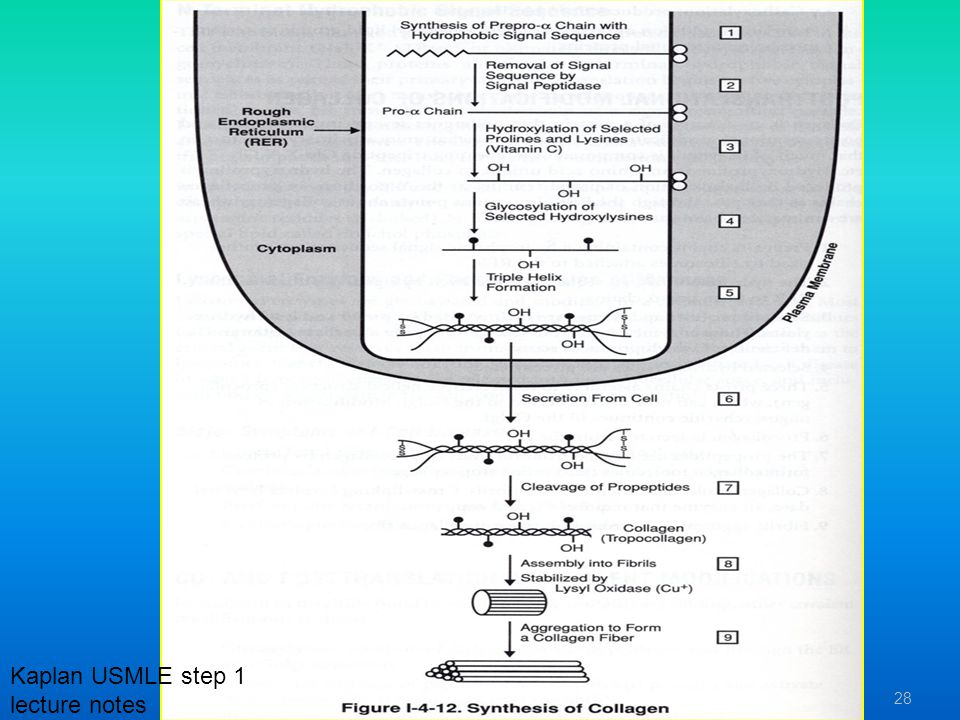 Kaplan USMLE step 1 lecture notes