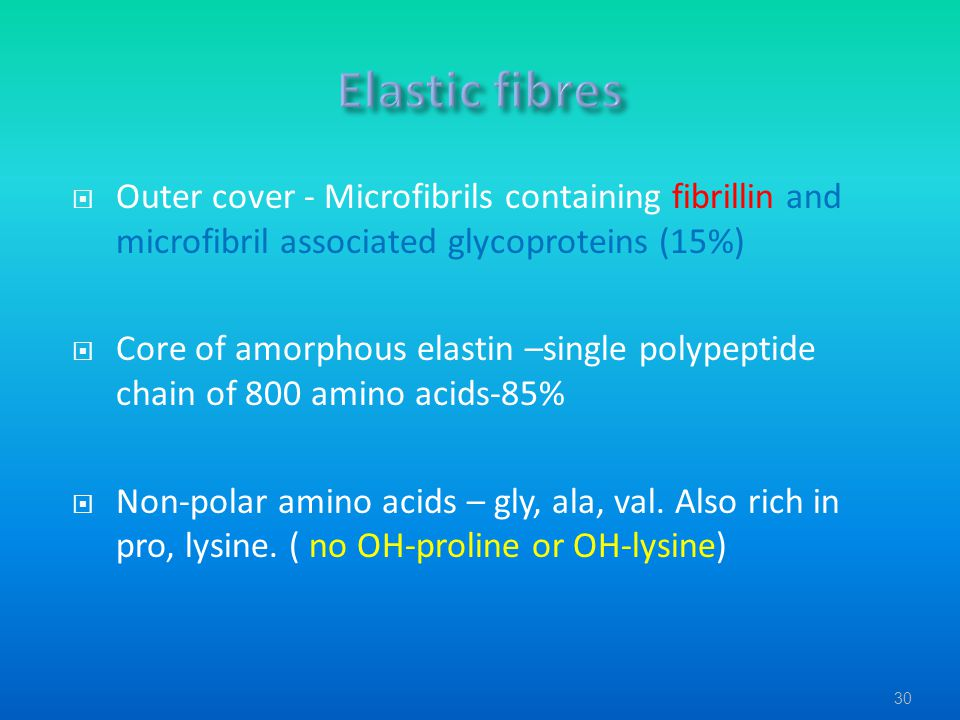 Elastic fibres Outer cover - Microfibrils containing fibrillin and microfibril associated glycoproteins (15%)