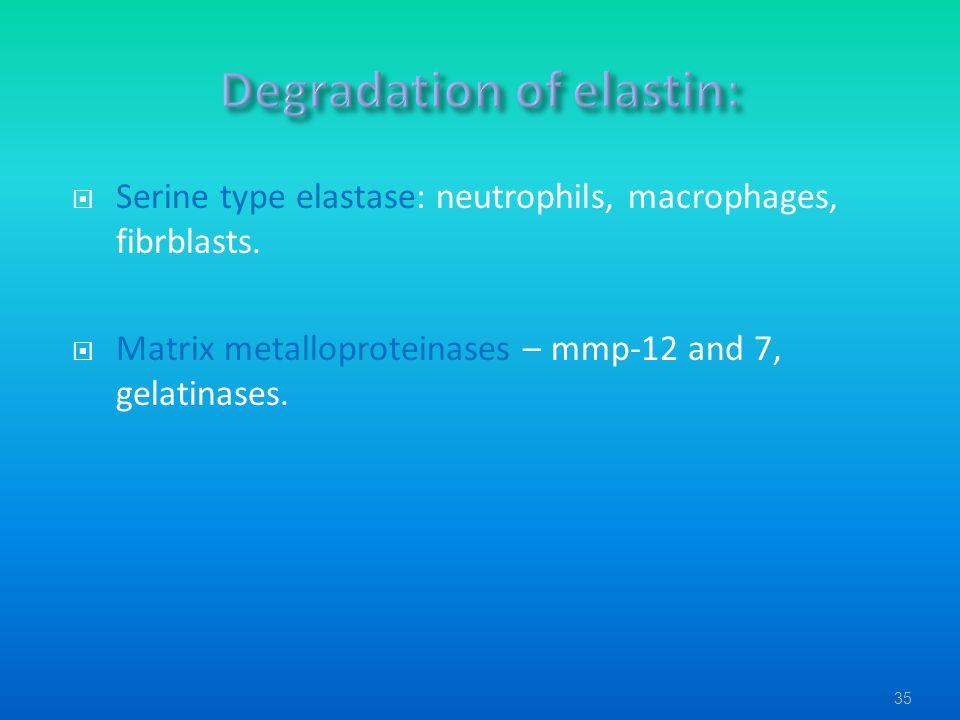 Degradation of elastin: