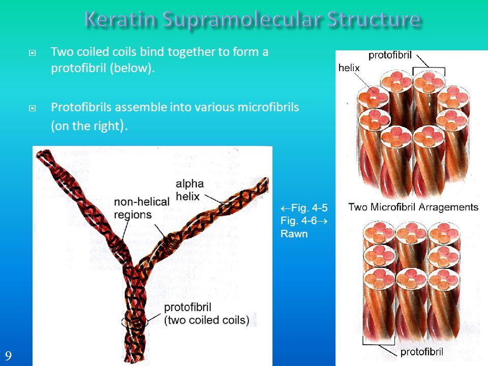 Keratin Supramolecular Structure