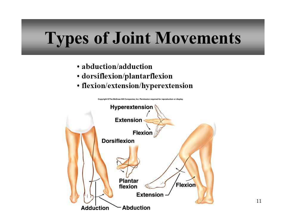 Types of Joint Movements