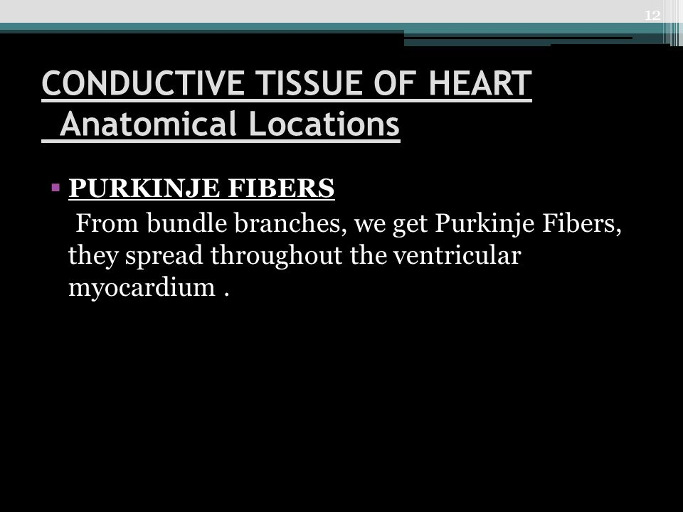 CONDUCTIVE TISSUE OF HEART Anatomical Locations