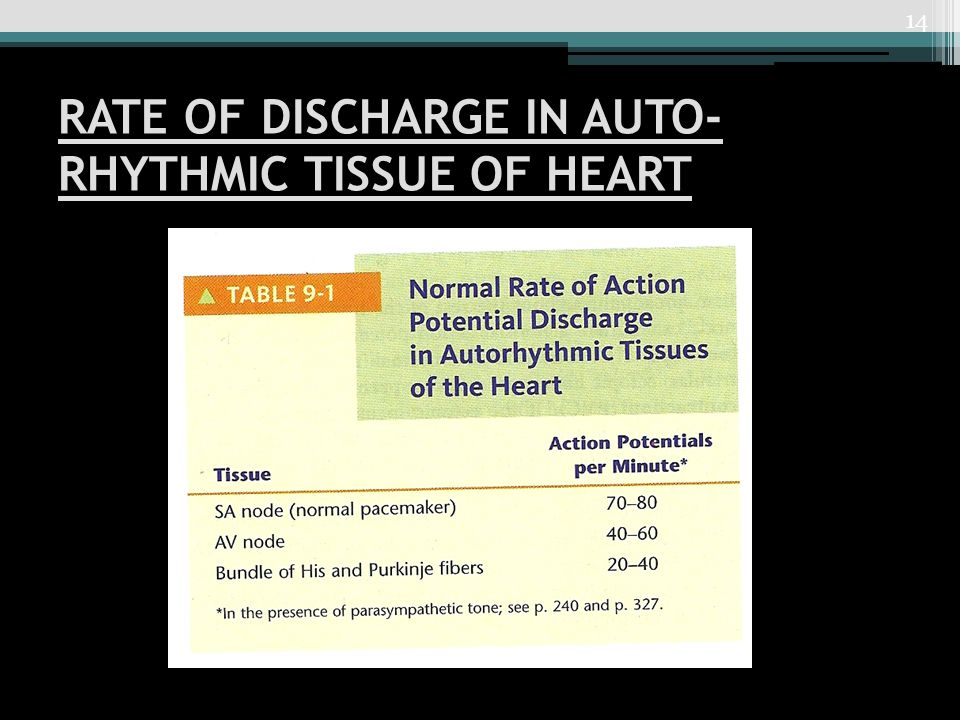 RATE OF DISCHARGE IN AUTO-RHYTHMIC TISSUE OF HEART