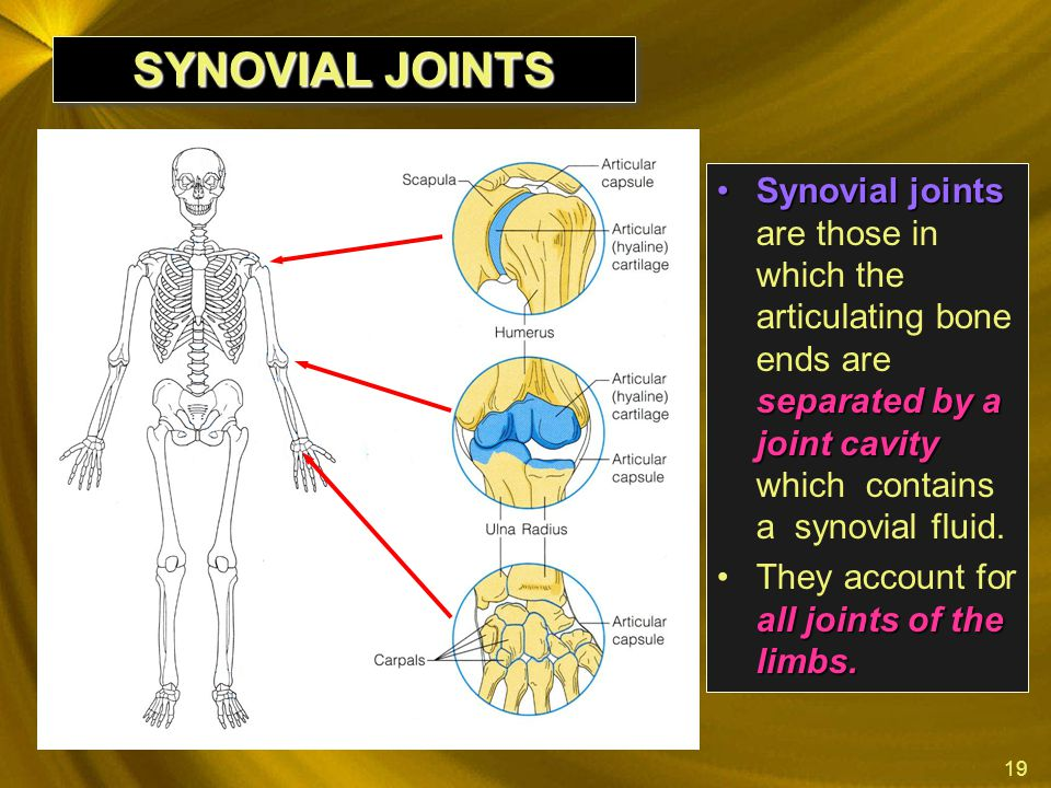 SYNOVIAL JOINTS Synovial joints are those in which the articulating bone ends are separated by a joint cavity which contains a synovial fluid.