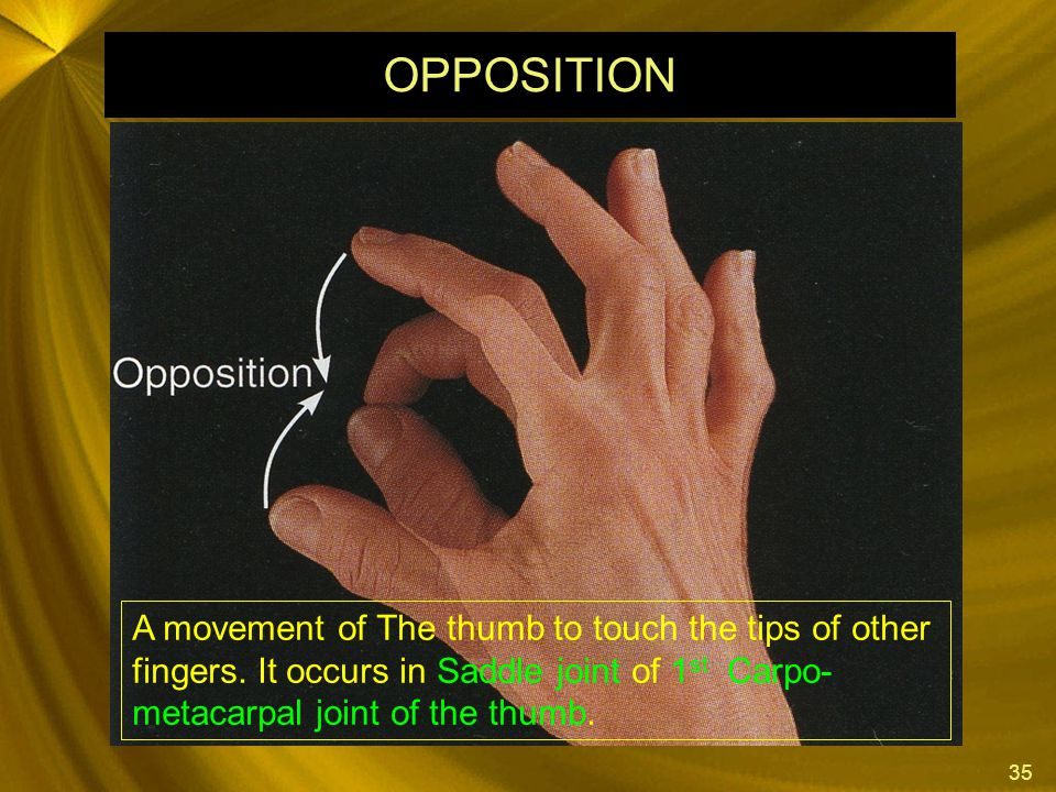 OPPOSITION A movement of The thumb to touch the tips of other fingers.