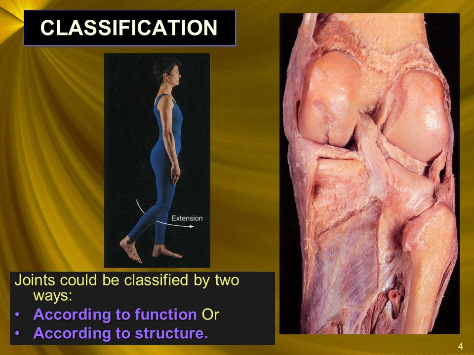 CLASSIFICATION Joints could be classified by two ways: