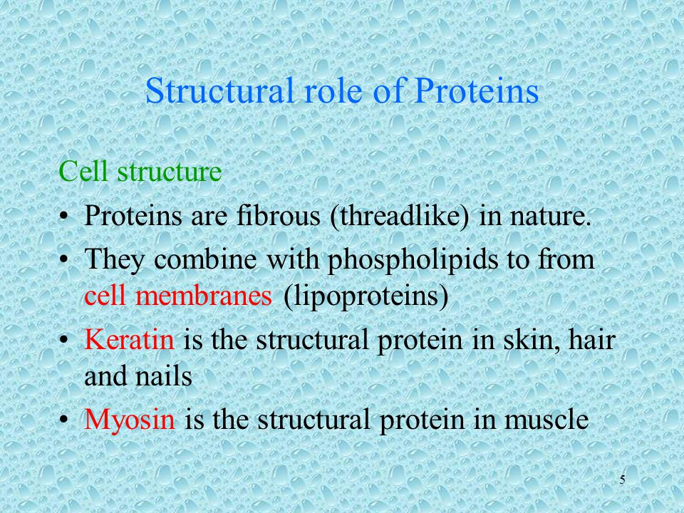 Structural role of Proteins