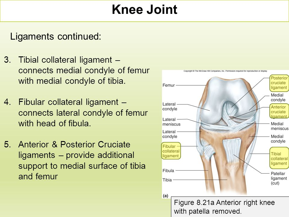 Knee Joint Ligaments continued: