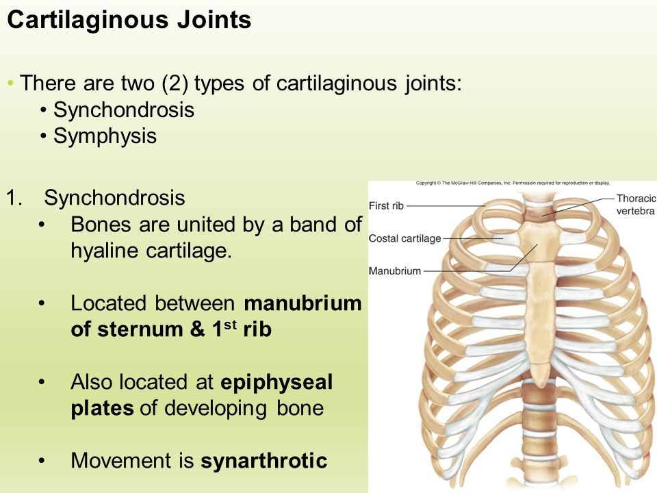 Cartilaginous Joints There are two (2) types of cartilaginous joints: