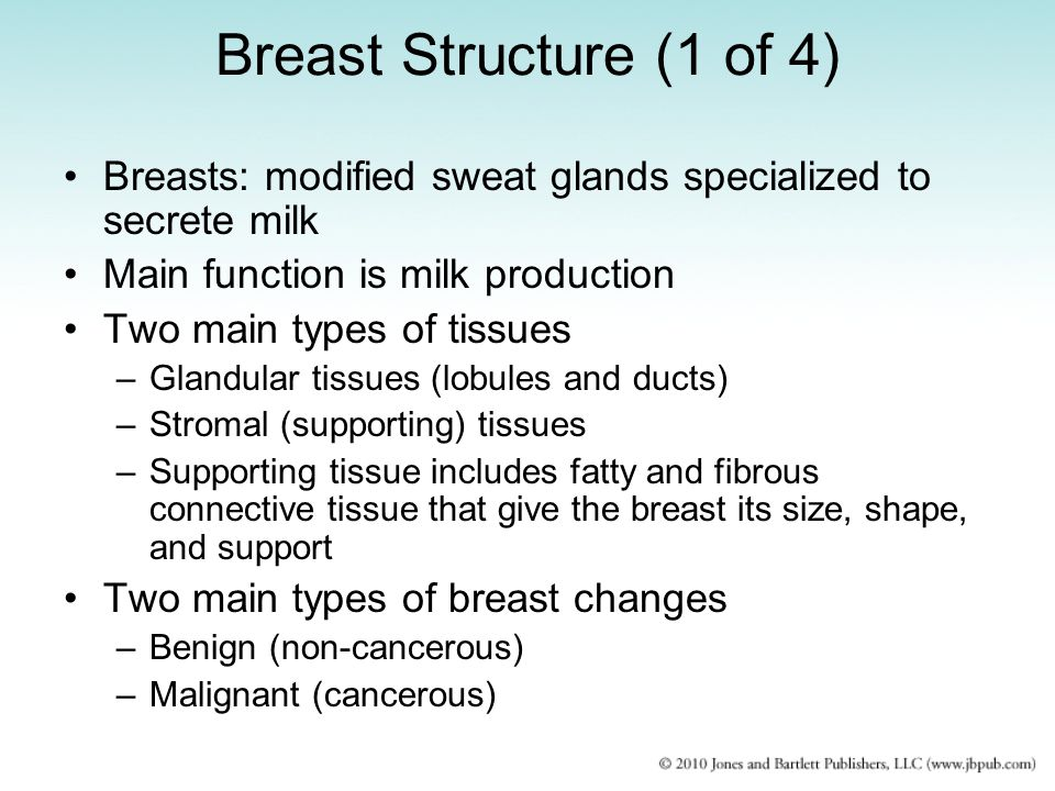 Breast Structure (1 of 4) Breasts: modified sweat glands specialized to secrete milk. Main function is milk production.