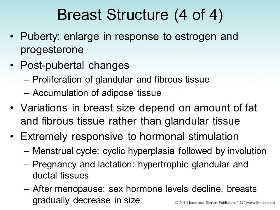 Breast Structure (4 of 4) Puberty: enlarge in response to estrogen and progesterone. Post-pubertal changes.