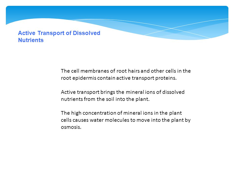 Active Transport of Dissolved Nutrients