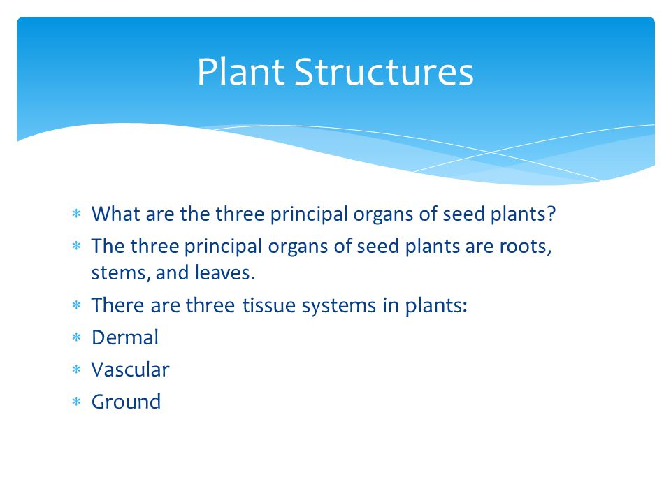 Plant Structures What are the three principal organs of seed plants